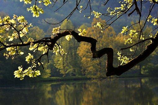 Tree, Branch, Lake, Backlighting, Sun, Evening