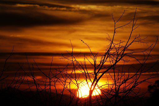 Sunset, Branches, Backlight, Clouds, Orange, Silhouette