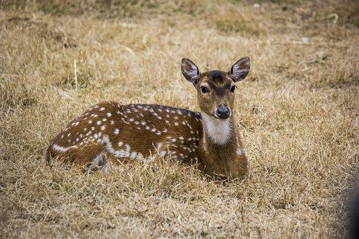 Black Buck, Buck, Deer, Pakistan, Travel, Wildlife