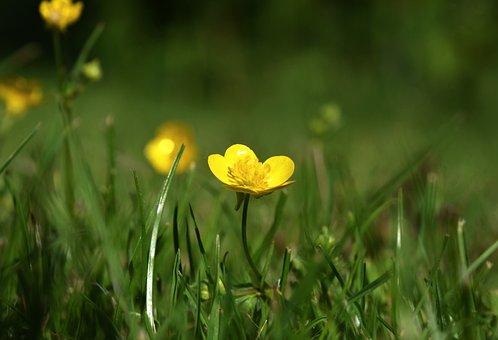 Goldilocks, Humor, Flower, Yellow, Nature, Spring