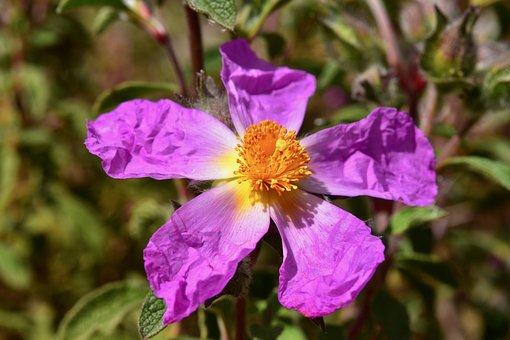 Flower, Flower Flower Stamens, Pistil, Spring-flowering