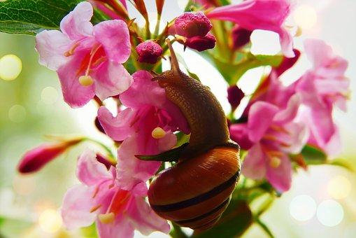 Wstężyk Huntsman, Molluscum, Flowers, Jasmine, Garden