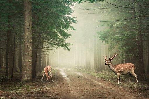 Landscape, Forest, Deer, Nature, Path