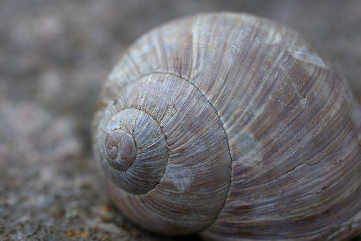 Snail, Shell, Slowly, Close Up, Macro, Spiral, Mollusk