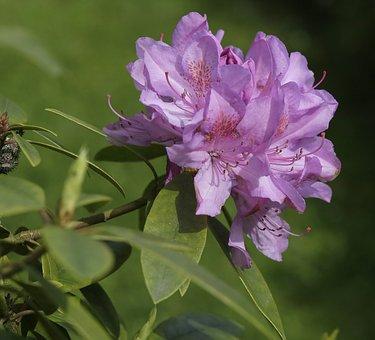 Garden, Flower, Pink, Flora, Nature, Spring, Floral