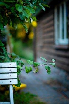 Garden, Chair, Tree, Leaf, Window, Barn, Summer, Nature