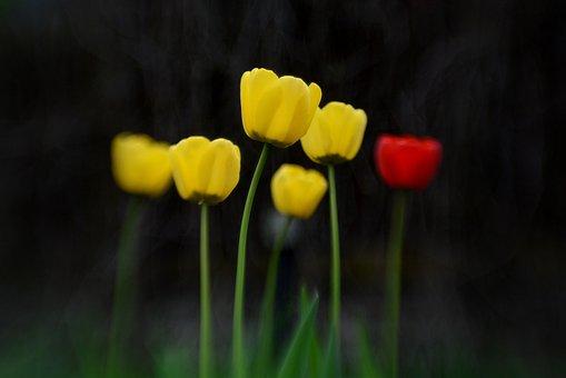 Flower, Nature, Summer, Spring, Garden, Flora, Outdoor