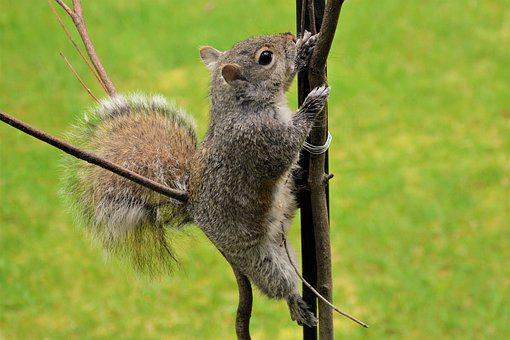 Squirrel, Young, Climbing, Grasping, Pole, Furry