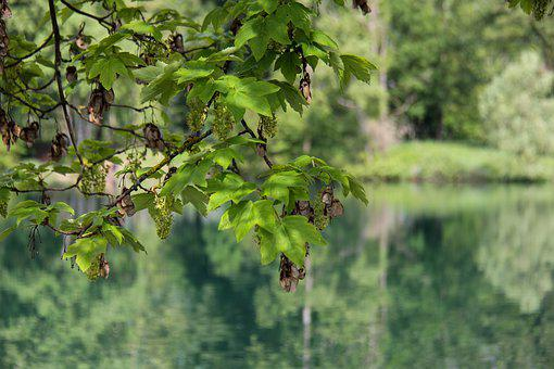 Lake, Reflection, Water, Nature, Trees, Calm, Savoie