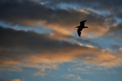 Sunset, Seagull, Sky, Silhouette, Animal, Orange, Sun