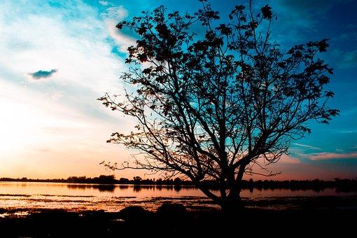 Sunset, Tree, Trees, The Landscape, Nature, Sky