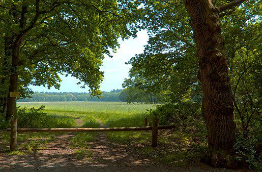 Meadow, Trees, Landscape, Grass, Tree, Outdoor
