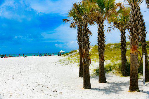 Clearwater Beach, Palm Tree, Sand, Water, Coast, Trees