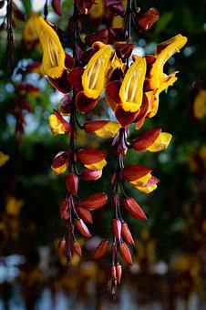 Orchid, Yellow, Red, Flower, Beauty, Plant, Ornamental