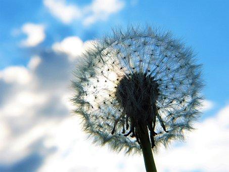 Dandelion, Umbrella, Sky, Clouds, Seeds, Nature
