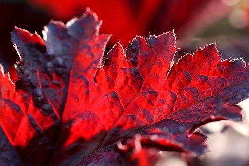 Leaves, Backlighting, Autumn, Forest, Leaf, Leaf Veins