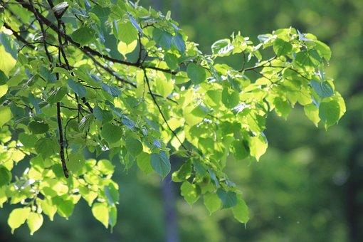 Tree, Leaves, Sun, Forest, Landscape, Backlight, Mood