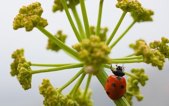 Macro, Plants, Earth, Landscape, Green, Grass, Animals