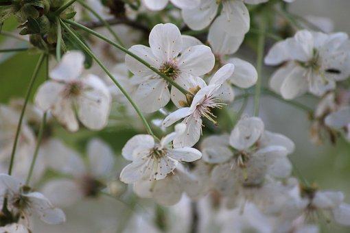 Bloom, Spring, Tree, White, Greens, Nature, Flower