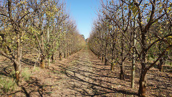 Trees, Fruit Trees, Orchard, Autumn