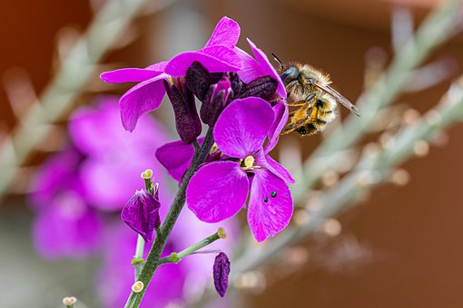Bee, Flower, Cross-pollination, Pollen, Color, Biology
