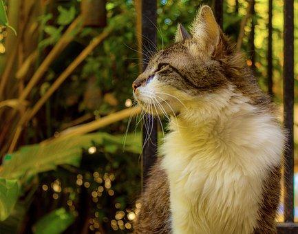 Cat, Looking, Animal, Pet, Portrait, Mammal, Predator