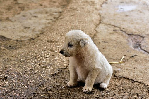 Dog, Small, Young, Pet, Animal, Cute, Puppy, Charming