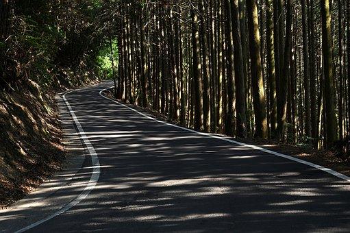 Woods, Road, Landscape, Wood