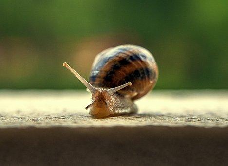 Snail, Gastropod, Shell, Spiral, Molluscum, Helix