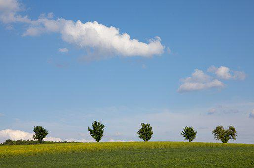 Field, Clouds, Trees, Sky, Landscape, Simply, Summer