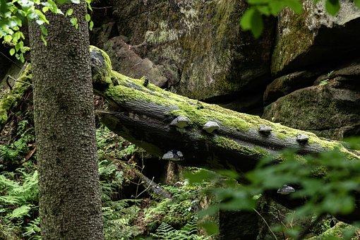 Tree, Mushrooms, Forest, Nature, Landscape Master
