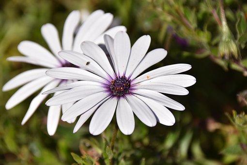 Flower, White Flower, Petals, Stamen, Pistil, Nature