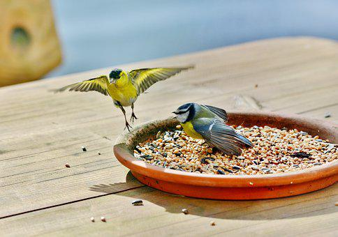 Birds, Bird Food, Seed, Blue Tit, Wing, Carry