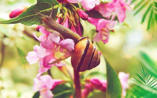 Jasmine, Flower, Posts, Wstężyk Huntsman, Molluscum