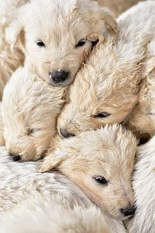 Puppies, Young, Small, Tender, Brothers And Sisters