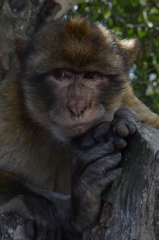 Monkey, Animal, Sorry, Lonely, You're Thinking About