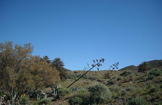 Agave, Agave Flowers, Isleta Del Moro, Mediterranean