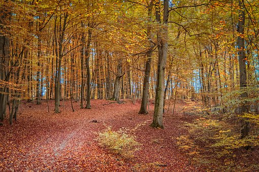 Autumn, Forest, Nature, Away, Leaves, Landscape