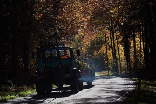 Road, Unimog, Vice, Forest, Autumn, Fall Foliage