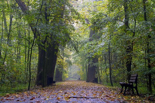 Autumn, Colorful Leaves, Yellow, The Fog, Forest