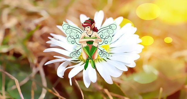 Flower, Fee, Daisy, Blossom, Bloom, White