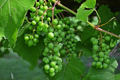 Bunch Of Grapes, Fruit, Wine, Grapes, Nutrition, Health