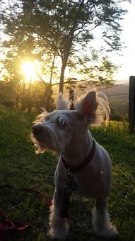 Dog, Nature, Sunlight, Dignity, Best Friend, Animal
