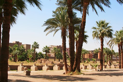 Egypt, Luxor, Karnak Temple, Palm Trees, Animal