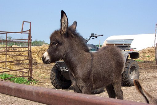 Donkey, Young, Brown, Cute, Mule, Farm, Animal, Ass