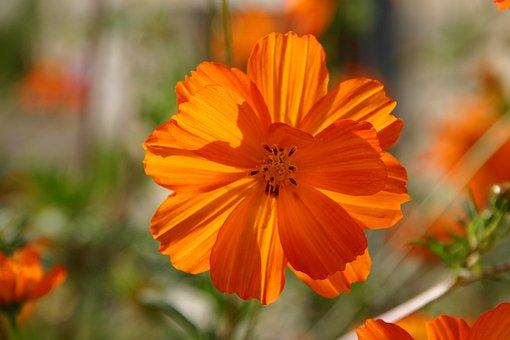 Flower, Orange, Happy, Bright, Nature, Spring, Floral
