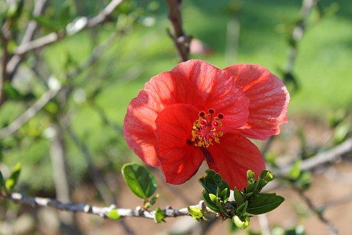 Flower, Nature, Red, Flowers, Summer, Plant, Garden