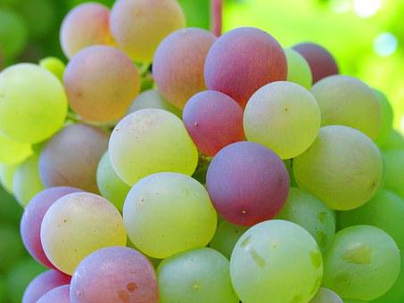 Grape, Cluster, Bunch Of Grapes, Bower, Garden, Foliage
