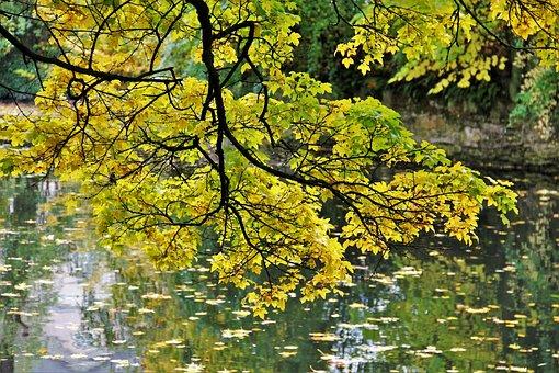 Golden October, Autumn Idyll, Fall Foliage, Tree, River