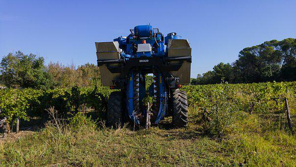 Harvest, Grape Harvesting Machine, Agricultural Machine